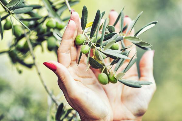 Kalamata Oliven geschnitten & gewürzt | Lakudia 250g
